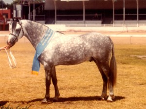 Weston Olympian (imp)
